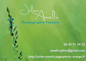 carte-de-visite-Julien-Amelin